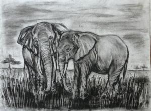charcoal drawing of two elephants